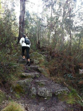 Booroomba Rocks Walk: steep trail up, Booroomba Rocks trail