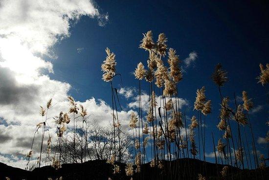 Simonskloof: Reeds