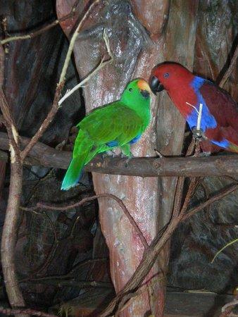 Pinnacle Koh Tao Resort: Попугайчики на ресепшене