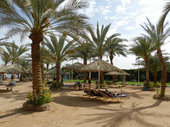 Hilton Sharm Dreams Resort: Vista della spiaggia