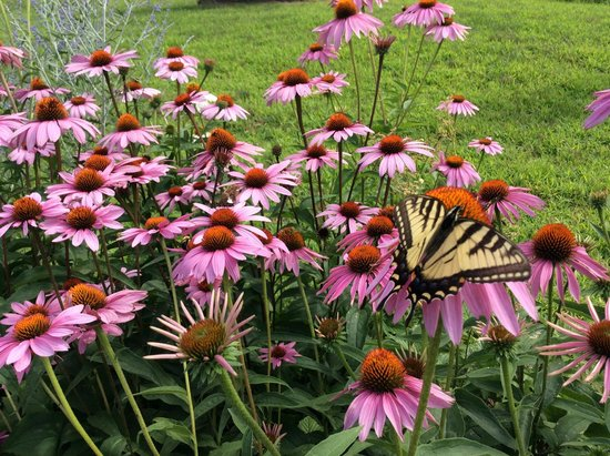 Great River Outfitters And The Path of Life Garden: wildlife