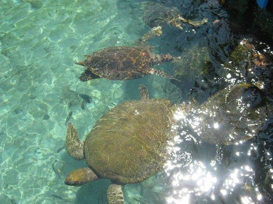 Tours en Islas del Rosario: Acuario