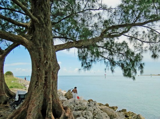 Sand Key Park: Fishing and Picnic too...