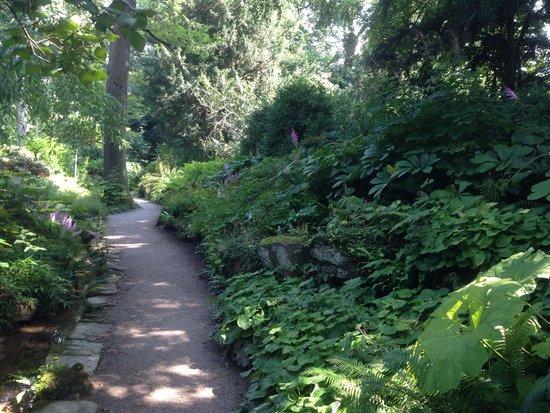 Botanischer Garten Muenchen-Nymphenburg: Garden