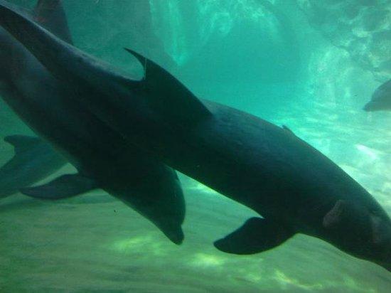 Georgia Aquarium : Dolphins Before Show