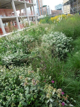 High Line: gardens