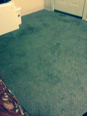Magic City Motel: Carpets on Floor of Room