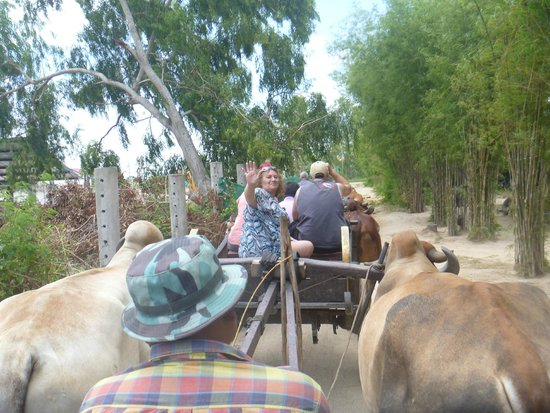 Pattaya Elephant Village: Ox carts
