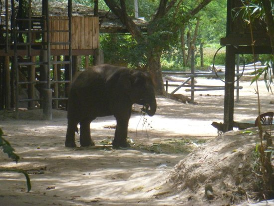 Pattaya Elephant Village: Baby Elephant