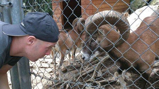 Zoo Et Piscine des Marecottes