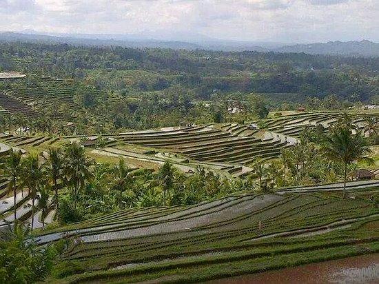 Bali Drivers Tour - Tur Harian