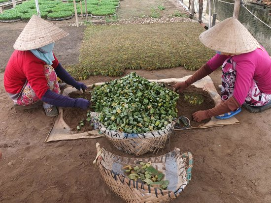 Water Buffalo Private Day Tours: Chili pepper seeds