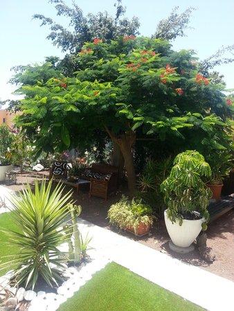 Vista Bonita Gay Resort: Giardino