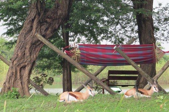 Mubanga Lodge: Area de descanso
