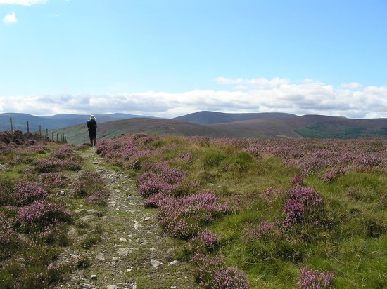 Wicklow Scenic Walks