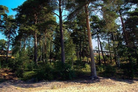 Hotel Rantapuisto : good shady pine