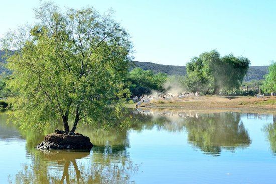 Chandelier Game Lodge & Ostrich Show Farm: Le lac bordant la terrasse du restau / petit-déj'