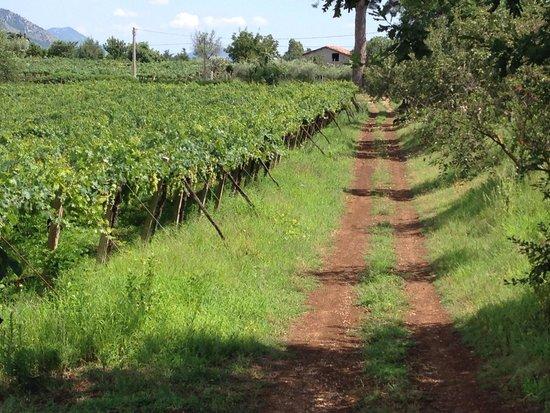 Agriturismo Villa Clementina: Scorci