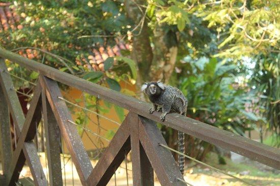 Pestana Angra Hotel: Miquinho na varanda do bangalô