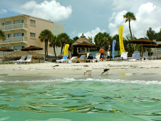 Sandcastle Resort at Lido Beach : beach area