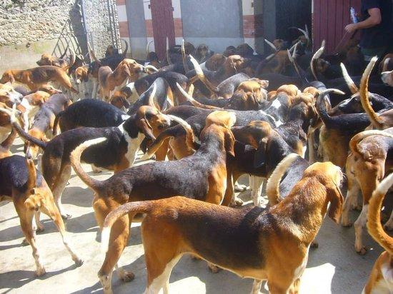 Château de Cheverny : repas des chiens