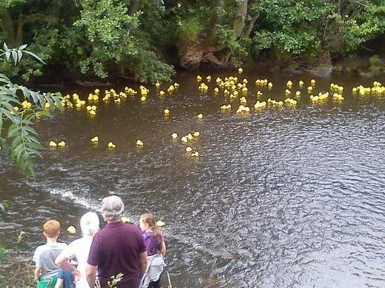 Board Inn: The duck race!