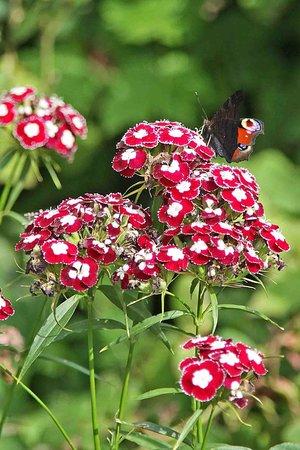 Hidcote Manor Garden: colour
