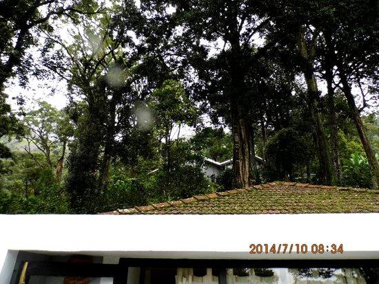 The Tall Trees Munnar: The Tall Tree
