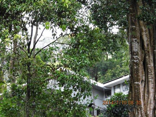 The Tall Trees Munnar: restaurent