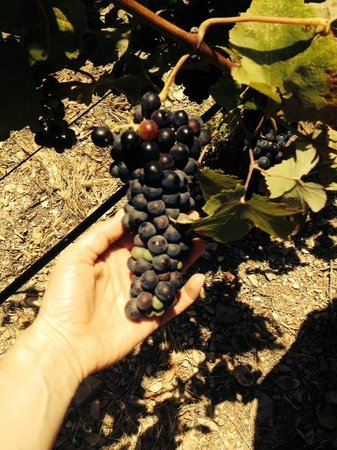 Sustainable Vine Wine Tours: Checking out the source