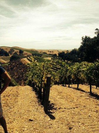 Sustainable Vine Wine Tours: The beautiful hillsides in Santa Ynez valley