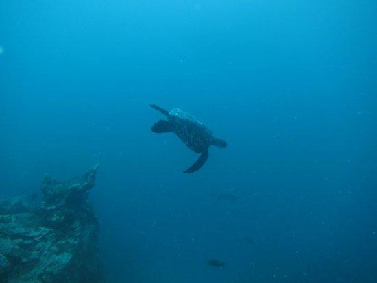 Academy Bay Dive Center: Non-ninja Turtle