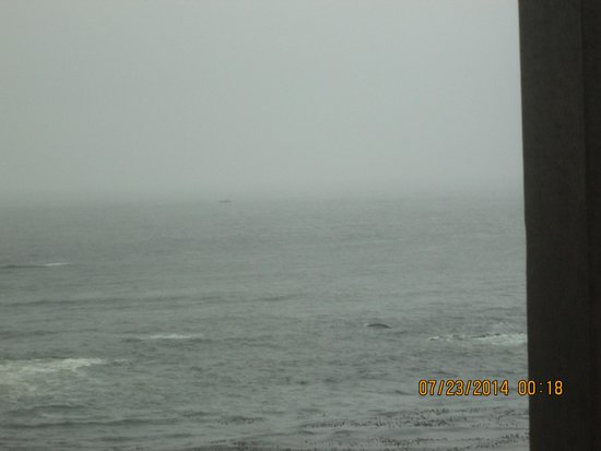 Clarion Inn Surfrider Resort : whale from our room
