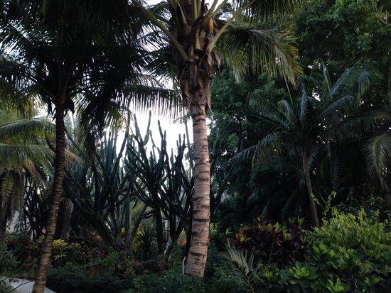 Blumarine Attitude : jardin tropical