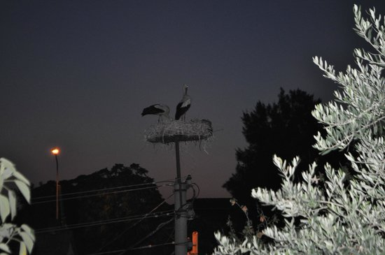Boomerang Guesthouse Ephesus : The storks outside the courtyard.