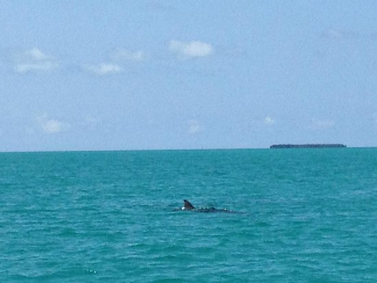 Catamaran Echo: Pod of dolphins
