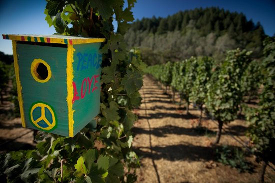 Spring Mountain Vineyard: Bluebirds nesting in an organic vineyard block