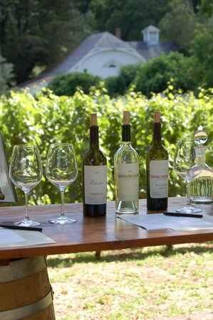 Spring Mountain Vineyard: Tasting set up in the olive grove
