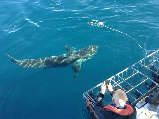 White Shark Projects : great views from the boat!!