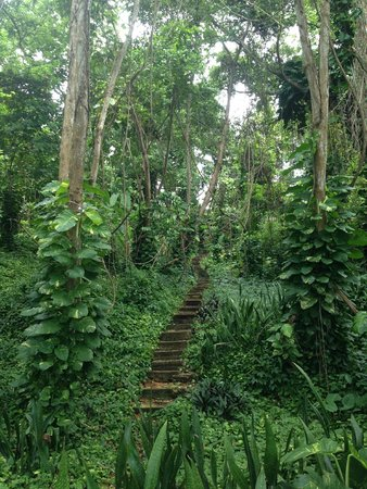 Round Hill Hotel & Villas: Jungle Along Path To Spa
