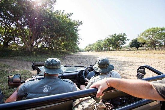 Leopard Mountain Safari Lodge: Game drives