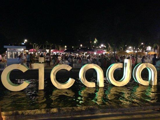 Cicada Market: market