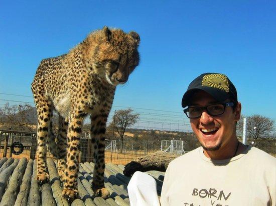 Walk With Lions: cheetah