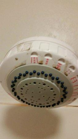 Best Western Plus O'Hare International South Hotel: dirty shower head