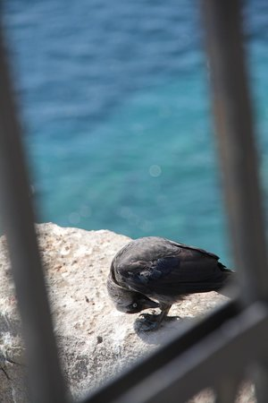 Castle of St. Peter : pigeon