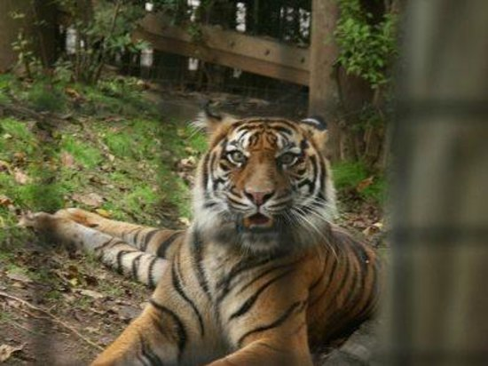 Cameron Park Zoo : Resident