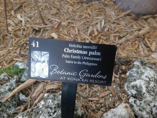 Kona Kai Resort, Gallery & Botanic Garden: Grounds