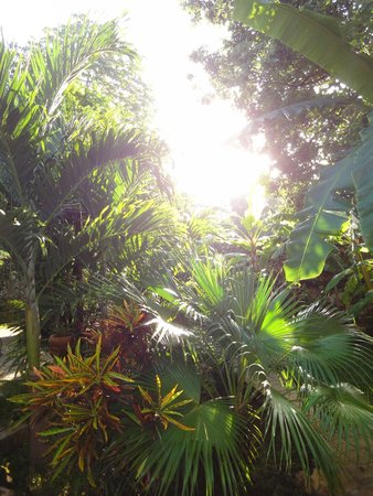 Casa Tía Micha : Lush garden