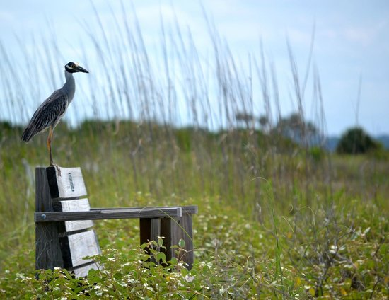 Honeymoon Island State Park : Benched
