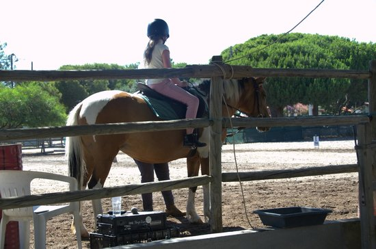 Pinetrees Horse Riding: Pinetrees Riding Centre - set  up and ready to go!